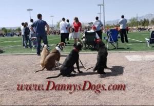 www.DannysDogs.com